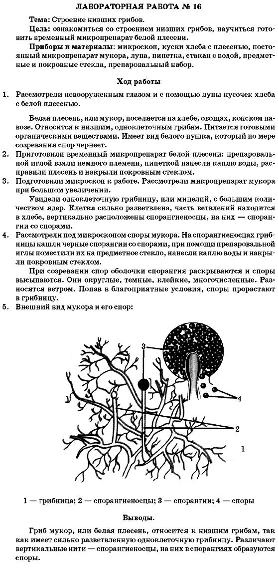 Промокоды и купоны Kolesa Darom («Колеса Даром») за январь.
