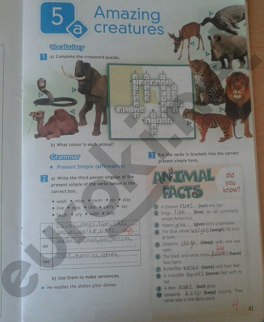 Up гдз по английскому 5-6 класс рабочая тетрадь