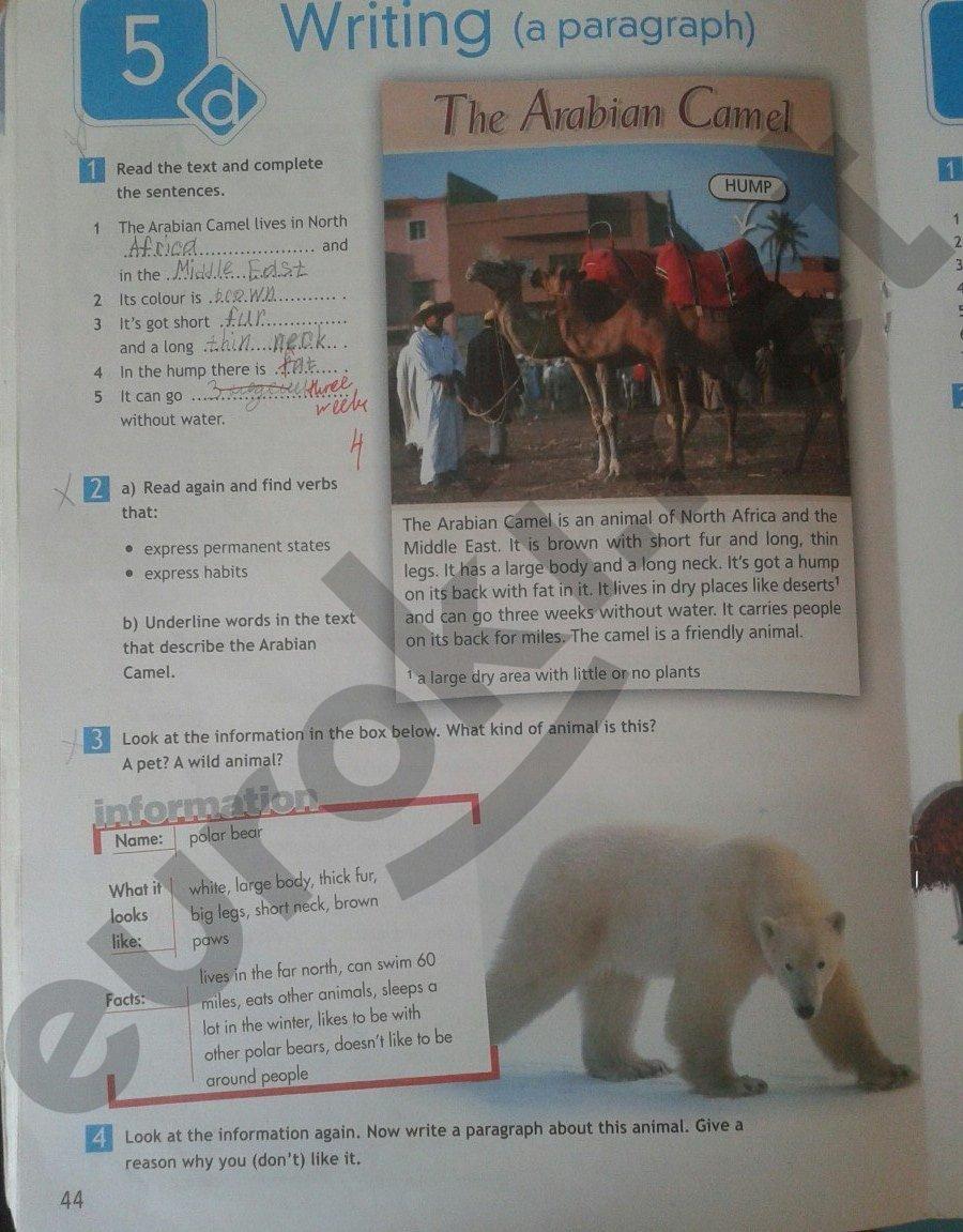 Гдз по рабочему тетради по английскому языку 5 класс с переводом