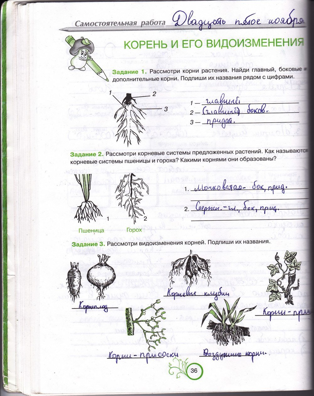 гдз по зошиту з биологии 6 класс