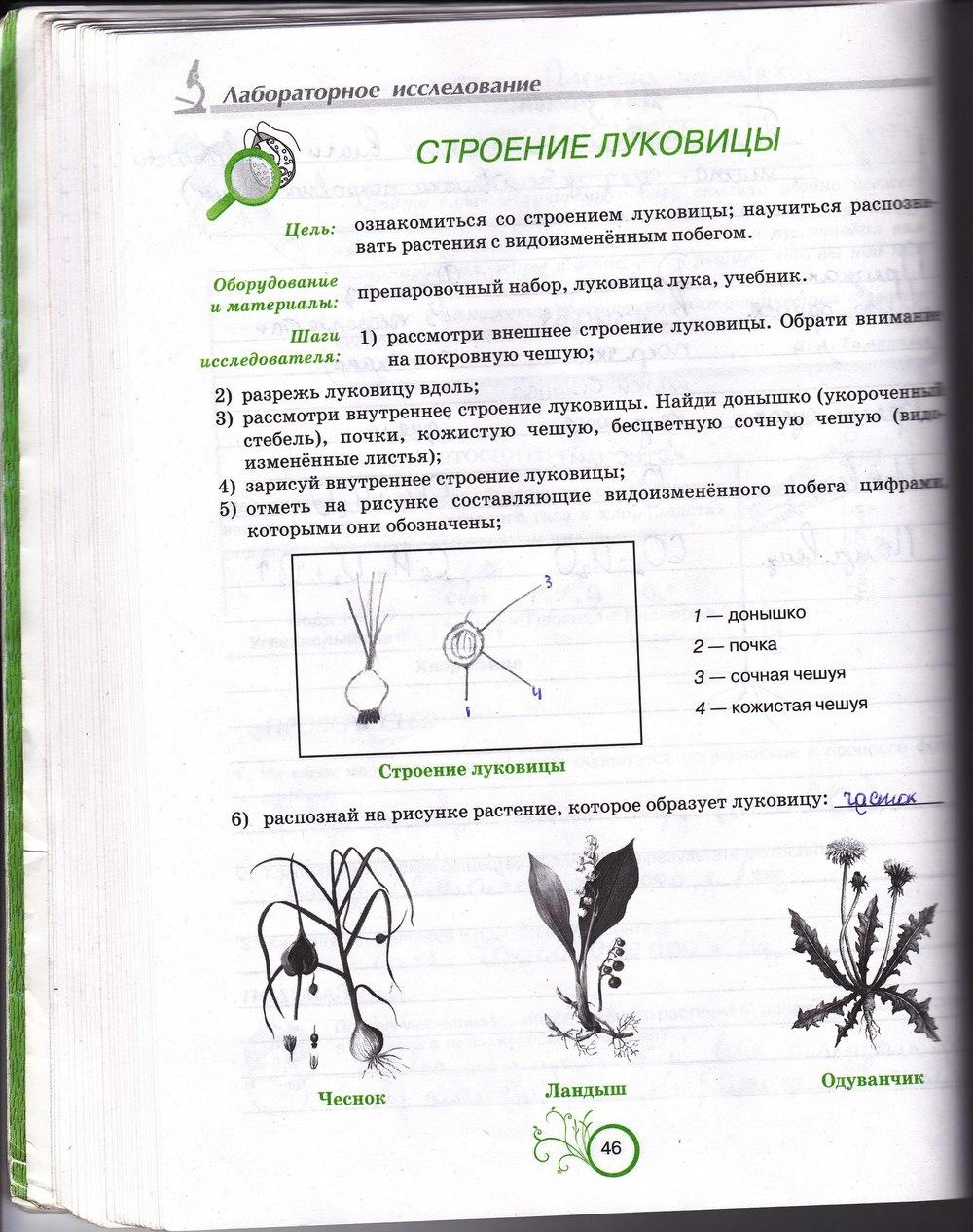 Класс гдз 6 биология зошит