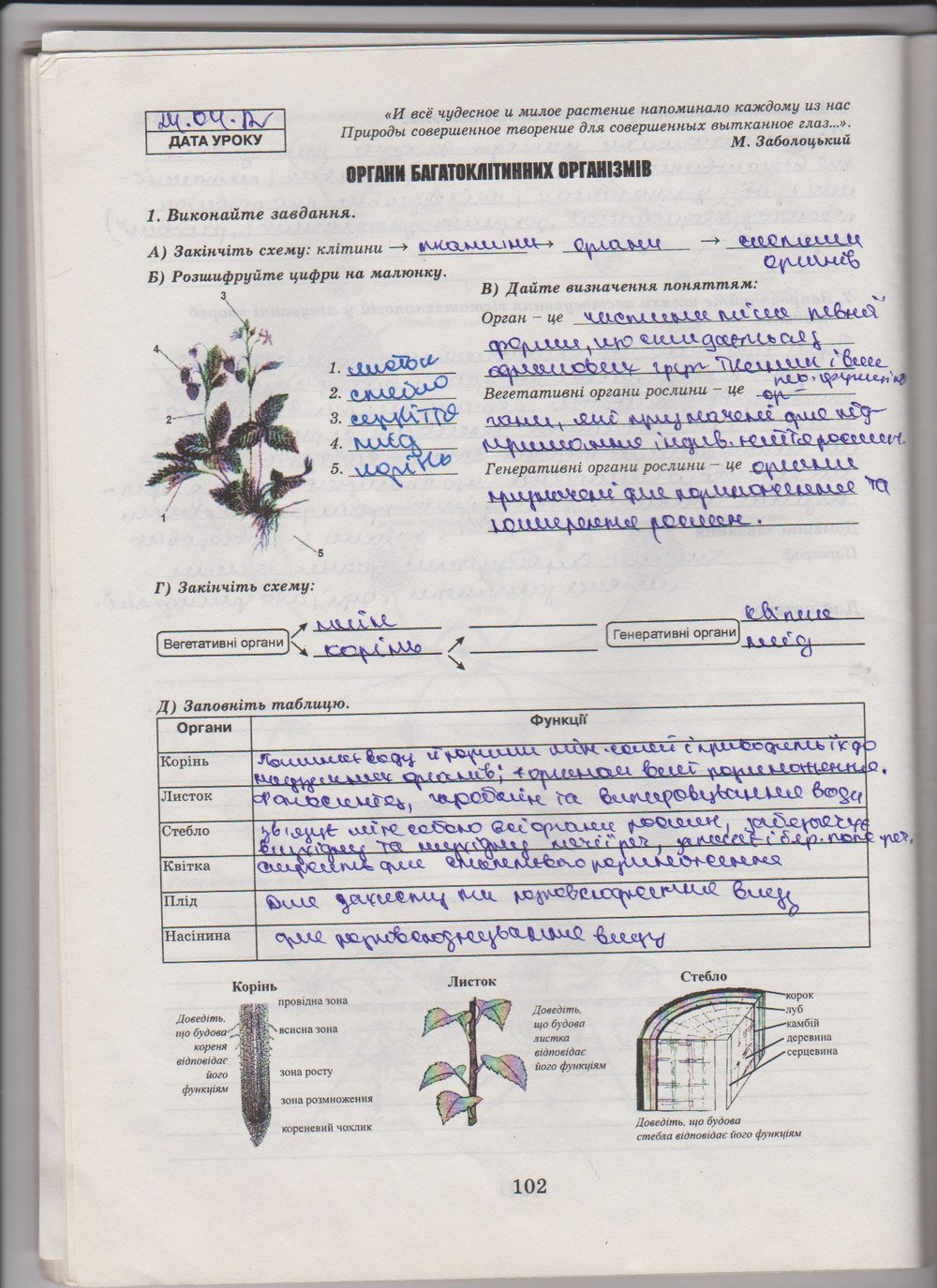 Решебник по биологии 10 класс зошит яковлева