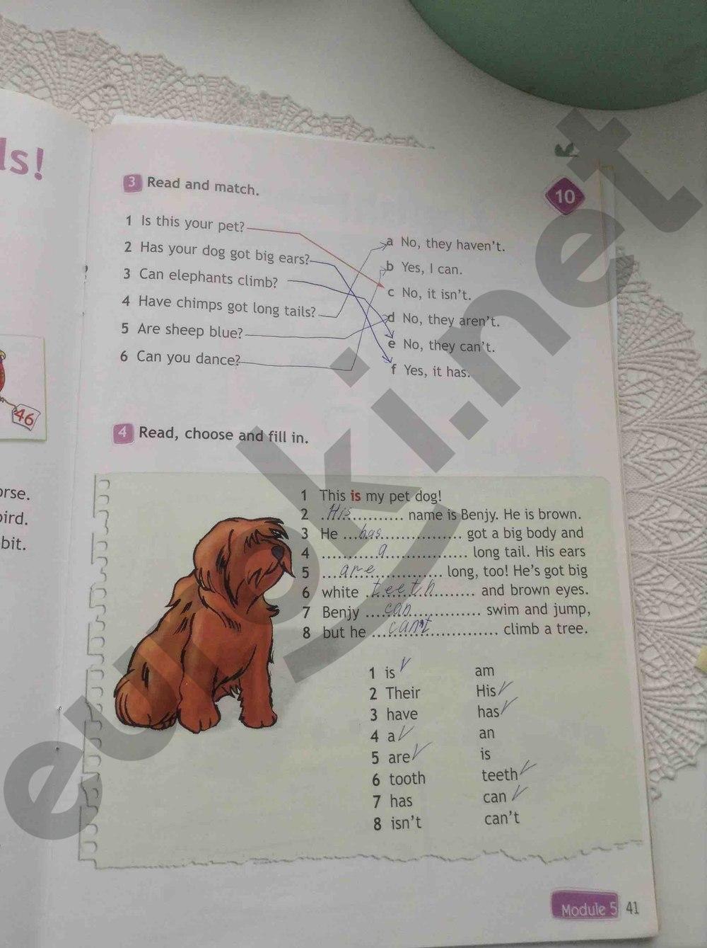 готовые домашние задания английский язык 3 класс рабочая тетрадь быкова