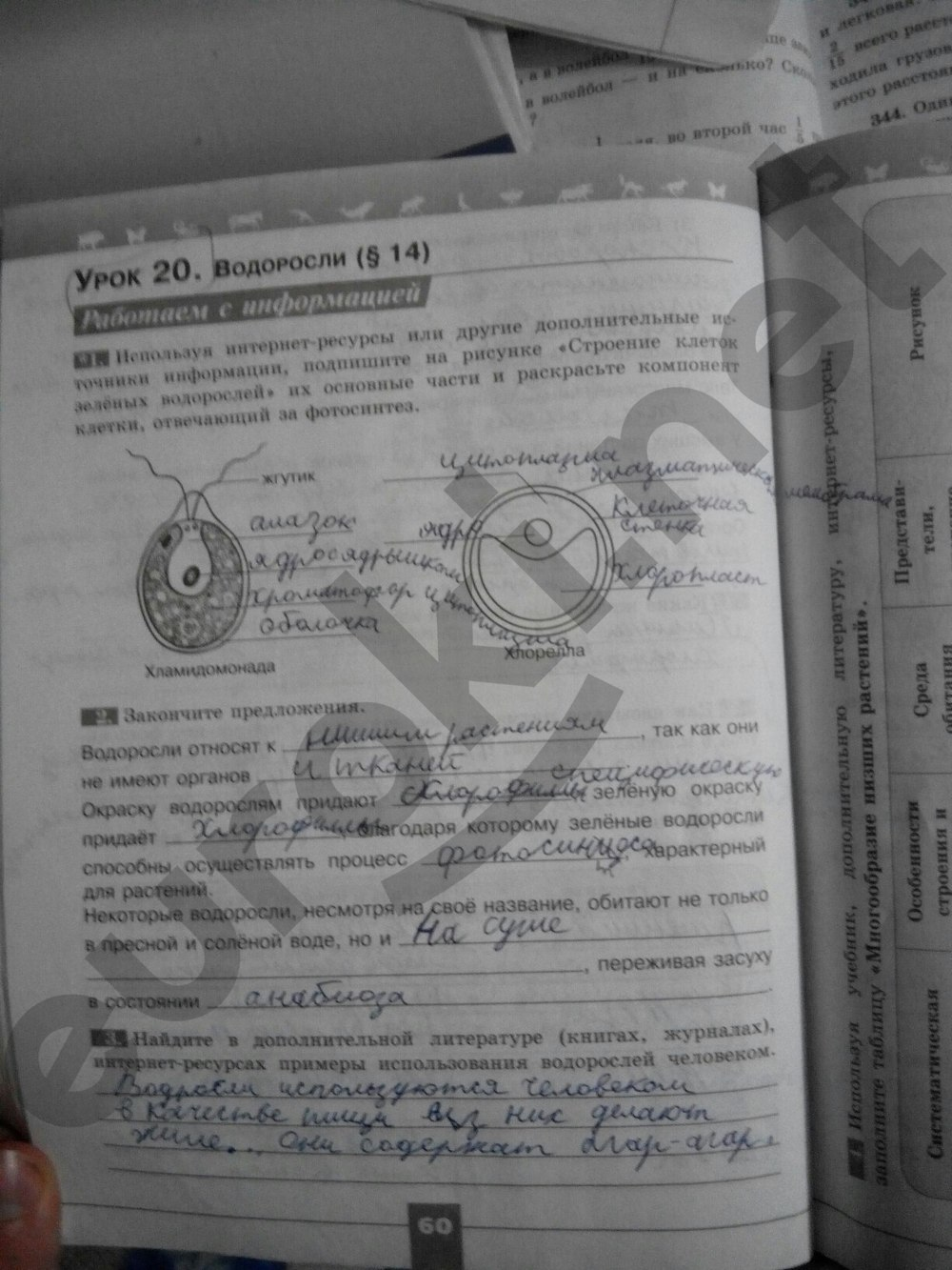 и биология в.в тетрадь учебник гдз 5 пасечника рабочая класс