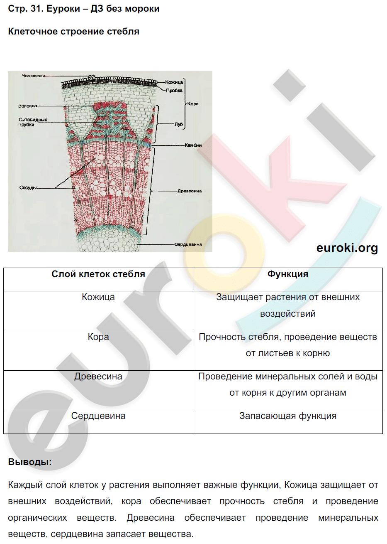 гдз биология 6 класс авторысухорукова кучменко тетрадь практикум строение стебля